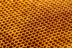 Beautiful honeycomb without honey texture Stock Images