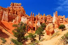 Beautiful Hoodoos Along Navajo Trail In Queen&x27;s Garden, Bryce Canyon National Park, Utah, Southwest, USA Royalty Free Stock Photos