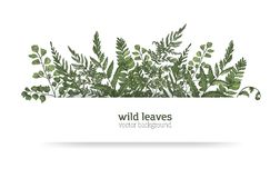 Beautiful horizontal background or banner decorated with gorgeous ferns, wild herbs or green herbaceous plants. Elegant. Herbal backdrop or border. Colorful Royalty Free Stock Images
