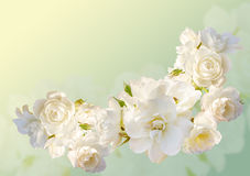 Beautiful  horizontal frame with a bouquet of white roses  with rain drops Royalty Free Stock Photography