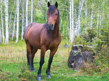 A beautiful horse Stock Photo