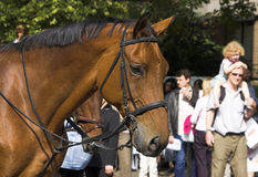 Beautiful Horse. Head close-up. Hyde Park, London. Picture is taken at the Horsemen's Sunday 2006 Royalty Free Stock Image