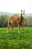 Beautiful Horse. Stand-up on grass with quiet position Royalty Free Stock Image