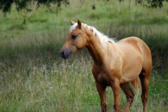 Beautiful Horse Stock Photography
