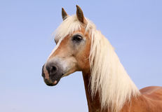Beautiful horse Stock Photos