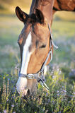 Beautiful horse. Portrait of a beautiful and healthy horse in the nature - copy space Stock Image