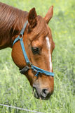 Beautiful horse Stock Images