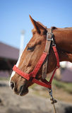 Beautiful horse Royalty Free Stock Photo