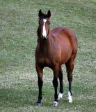 Beautiful Horse. In pasture setting Stock Photo