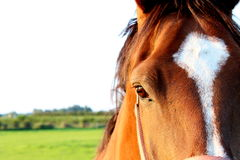 Free Beautiful Horse Stock Photos - 42587563