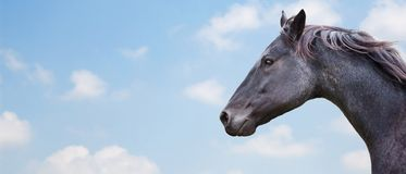 Beautiful Horse. With bright background Royalty Free Stock Photos