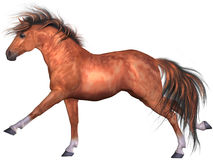 Beautiful Horse Royalty Free Stock Image