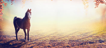 Beautiful horse on amazing autumn nature background, banner Stock Photo