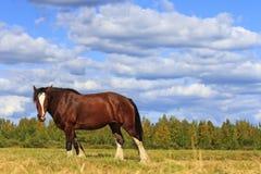 Beautiful horse amongst  scenery Royalty Free Stock Image