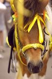 Beautiful horse Royalty Free Stock Image
