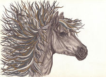 Beautiful Horse with bright colorful mane.Drawning by pencil .Close-up. Eloquent eyes Stock Image