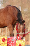 Beautiful horse with christmas gifts Royalty Free Stock Photography
