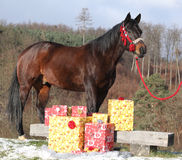 Beautiful horse with christmas gifts Royalty Free Stock Photos