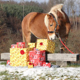 Beautiful horse with christmas gifts Stock Photography