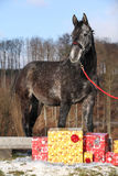 Beautiful horse with christmas gifts Stock Photo