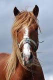 Beautiful horse close up Stock Photos