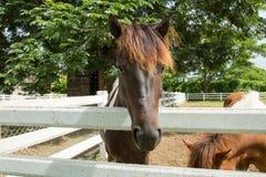 Beautiful horse. Stock Image