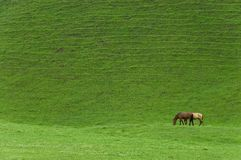 Beautiful horse couple on green meadow Stock Image