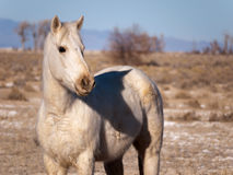 Beautiful horse in the desert Stock Images