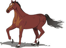 Beautiful horse drawing, color Royalty Free Stock Image