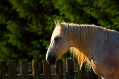 Beautiful horse at dusk Stock Images
