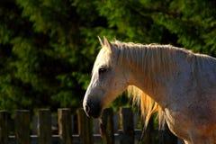 Beautiful horse at dusk Stock Images
