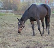 Beautiful brown horse. Autumn. stock photography