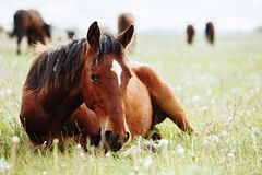 Beautiful horse is eating grass in the field royalty free stock photography