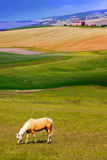 Beautiful horse eating grass in the meadow stock images