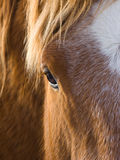 Beautiful horse eye Stock Images