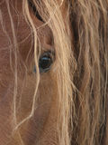 Beautiful Horse Eye Stock Photos