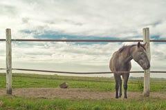 Beautiful Horse on the farm ranch Stock Photo