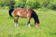 Beautiful horse grazing Royalty Free Stock Image