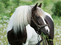Beautiful horse Stock Images