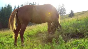 Beautiful horse on green meadow in mountains in sunlight stock footage