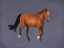 A beautiful horse in grey background Royalty Free Stock Photos