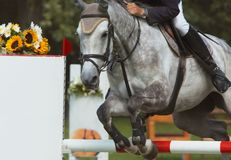 Beautiful horse jumping royalty free stock photos