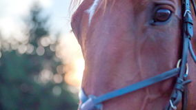 Beautiful horse looking the camera. Slow motion close-up RAW footage of a horse face looking towards the camera on a nice day with beautiful background stock video footage