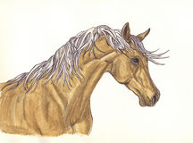 A beautiful horse with mane of decorative design . Painted with Stock Images