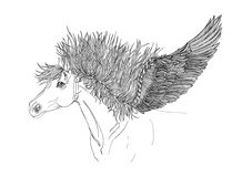 Beautiful Horse with mane and wings.Pegasus.Drawning by pen Stock Photos