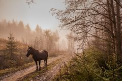 Beautiful horse in the mist at dawn in the mountains Royalty Free Stock Photos