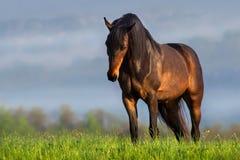 Beautiful horse in morning fog stock image