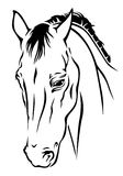 Beautiful horse muzzle Stock Image