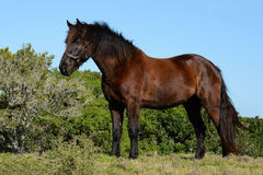 Beautiful horse in nature Stock Images