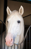Beautiful horse on nature Royalty Free Stock Photography